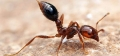 Fire Ants -  Updates Regarding Restricted Areas